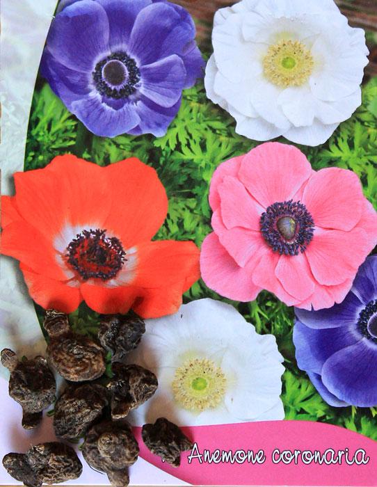 anemone-bulbs-tubers